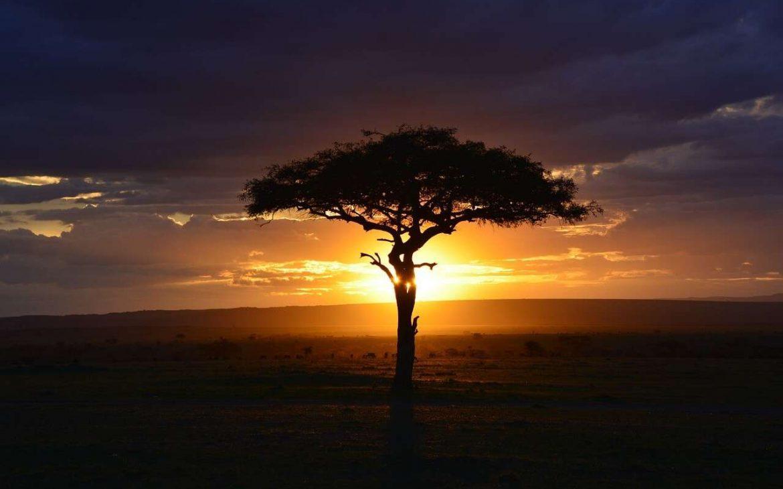 Evening at a National Park in Kenya