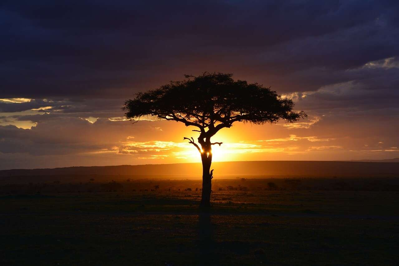 Evening at a National Park in Kenya