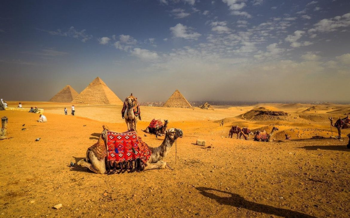 camels-at-the-site-of-pyramids-egypt
