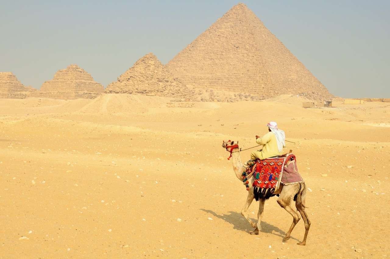 Camel in Cairo